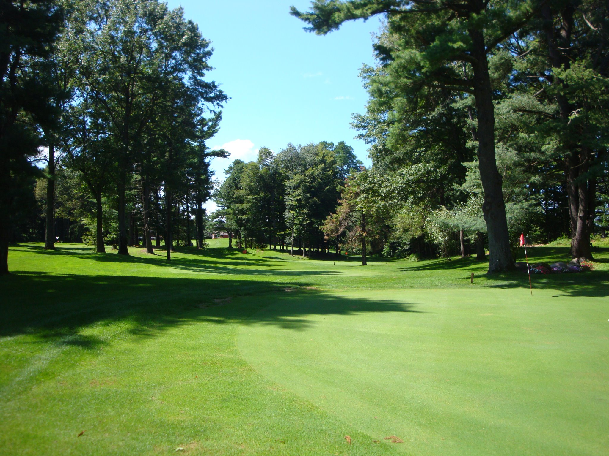 golf course showing green grass and tall pine trees
